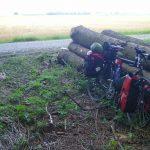 Pause bei Baumstämmen